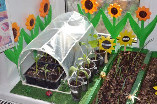 Оформление огорода на окне в детском саду своими руками фото